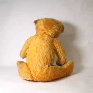 """Verna"" Australian Teddy"